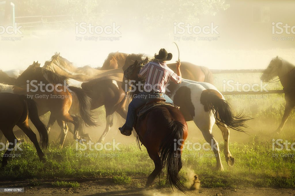 Cowboy bucking his horse to lead herd at ranch stock photo