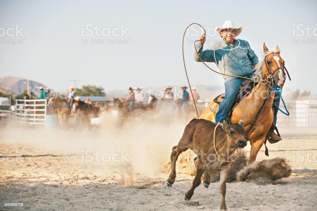 Cow-Boy en compétition en veau au lasso au rodéo de matin - Photo