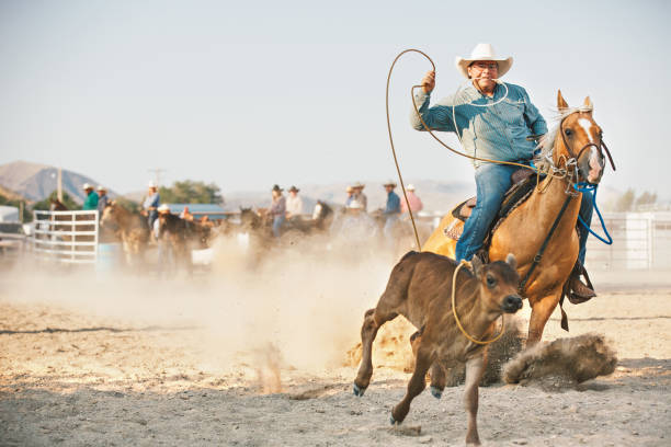 Cowboy Competing In Calf Roping at Morning Rodeo stock photo