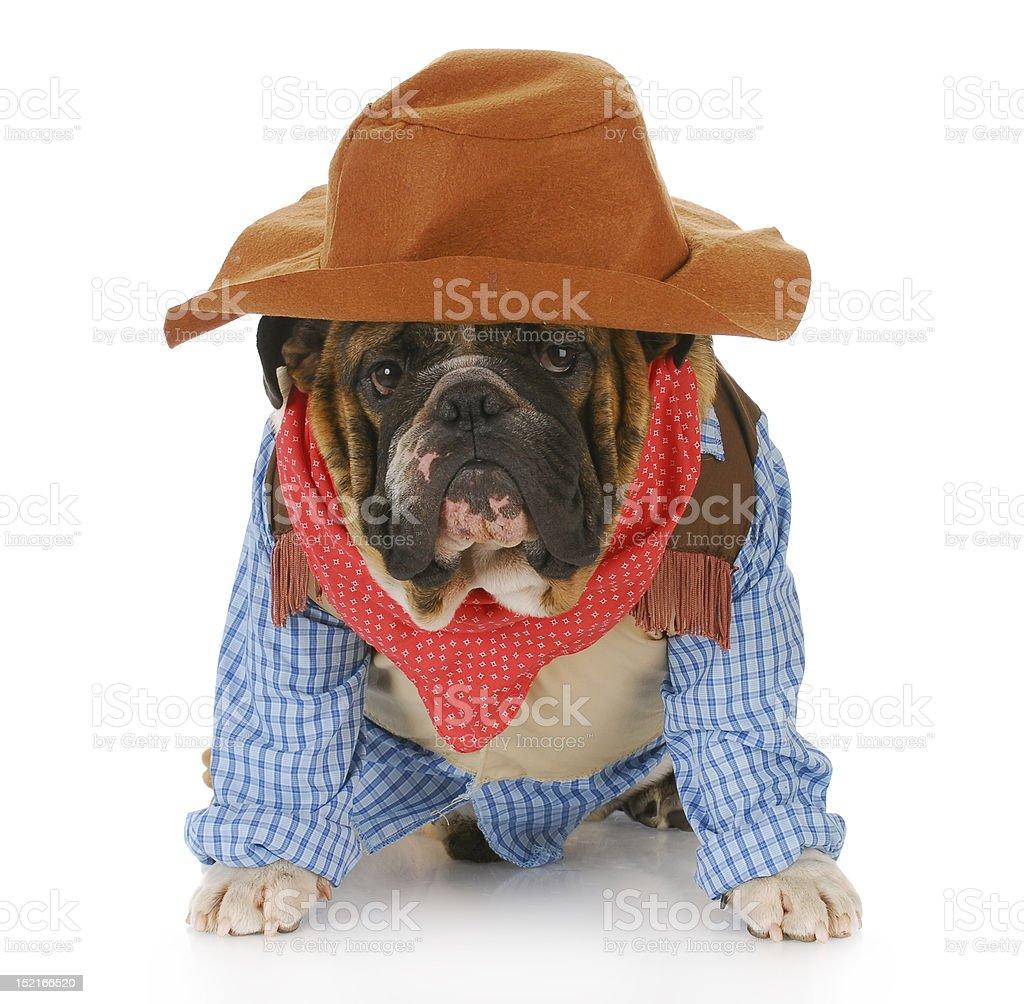 cowboy dog royalty-free stock photo