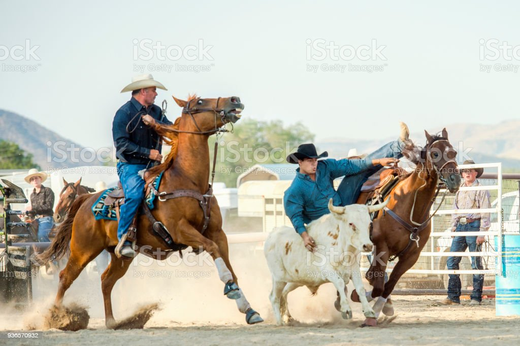 Cowboy Drop[ing Low Off Of His Horse To Grab The Horns Of A Running Steer. The Cowboy Riding Next To him is there to help. stock photo