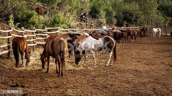 Cowboy Dude Ranch Horse Stables