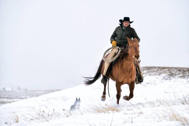 Cowboy galloping across snowy mountain in Montana Cowboy riding a quarter horse gallops across a snowy mountain, Livingston,  Montana, USA rancher stock pictures, royalty-free photos & images