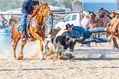 Cowboy get ready to take down a steer in a steer wrestling competition at a rodeo