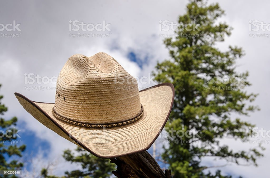 Cowboy hat and tree - foto de stock