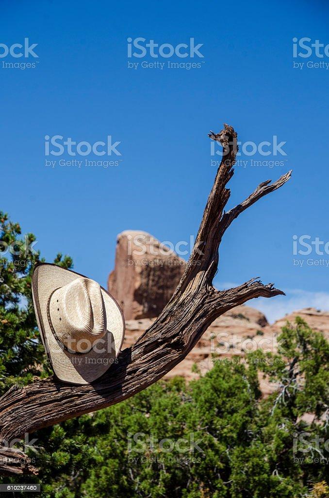 Sombrero de vaquero en un árbol - foto de stock