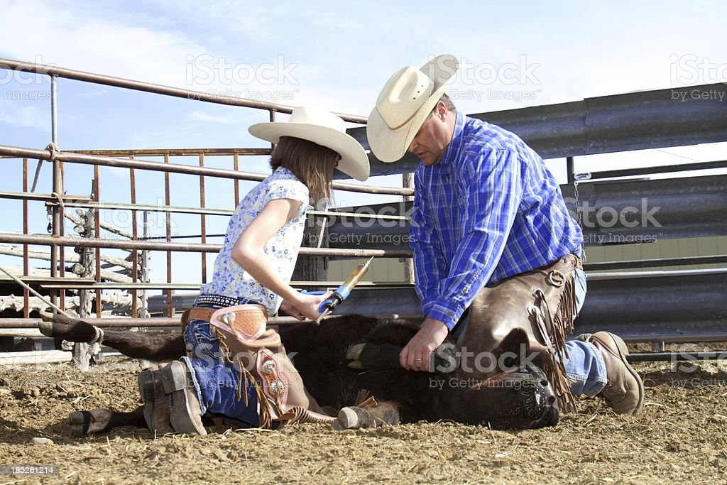 Cowboy helping young cowgirl vaccinate a calf royalty-free stock photo