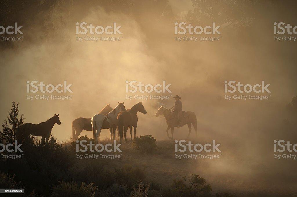 Cowboy herding horses early morning on high desert-back lit dust royalty-free stock photo
