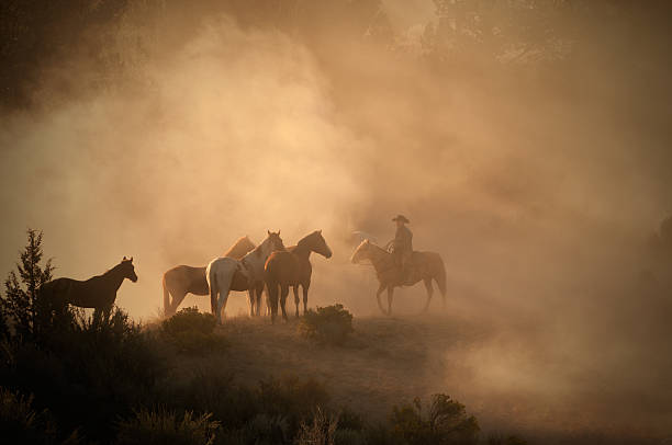 Cowboy herding horses early morning on high desert-back lit dust This image shows an early morning cowboy on the high desert watching over his herd of horses.http://www.garyalvis.com/images/wildWest.jpg working animal stock pictures, royalty-free photos & images