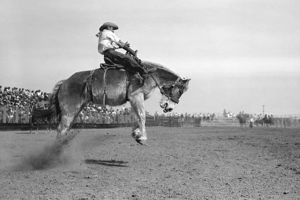 cowboy in saddle bronc riding competition at rodeo 1950 stock photo