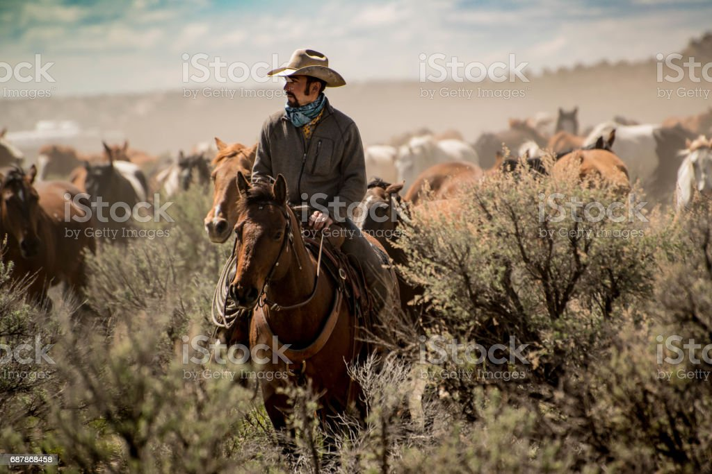 Cowboy leading herd of horses through dust and sage brush during roundup stock photo