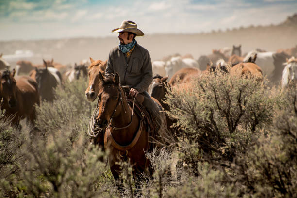 cowboy leading herd of horses through dust and sage brush during roundup - cowboy up stock-fotos und bilder