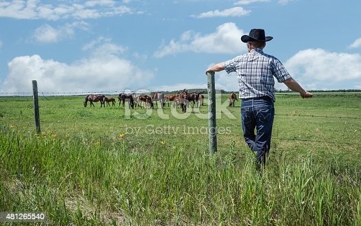 istock cowboy leaning against fence post gazing a horses in summer 481265540