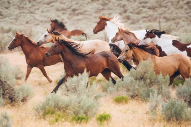 Cowboy lifestyle in utah picture id843001582?b=1&k=6&m=843001582&s=612x612&w=0&h=vfdmztgyswspajytrj tlbzwg31j2sgcdz4p d9wcvq=