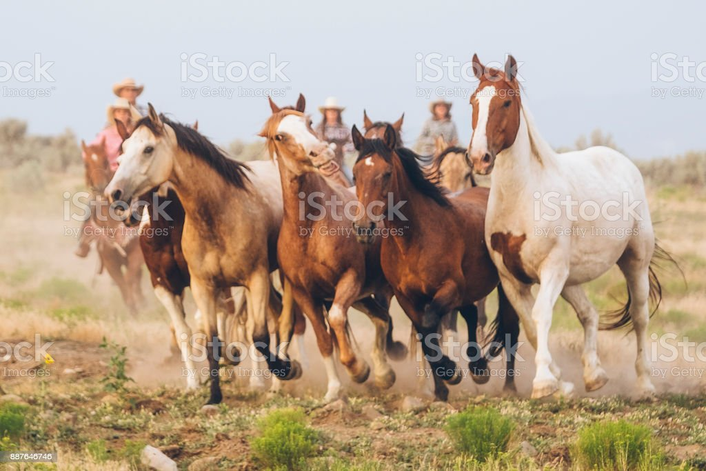 Cowboy Lifestyle in Utah royalty-free stock photo