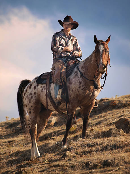 Cowboy on a Ridge A cowboy on a ridge in the afternoon in Spearfish South Dakota. appaloosa stock pictures, royalty-free photos & images