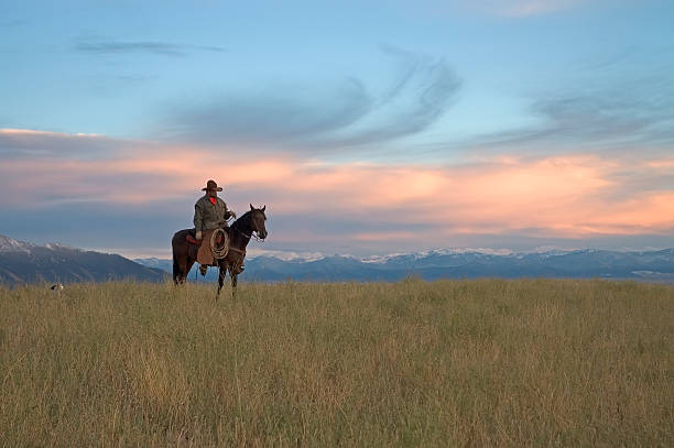 Cowboy on ridge,see my portfolio for others in series. Cowboy at dawn. Photographed on a working horse ranch in Montana rancher stock pictures, royalty-free photos & images