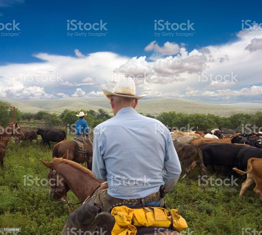 Cowboy foto de stock libre de derechos
