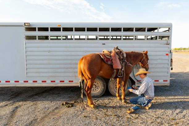 Cowboy Preparing Horses for a Rodeo stock photo