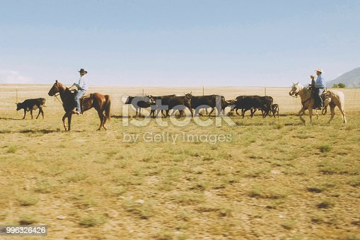 Cowboy ranchers on horseback working a small herd of cattle in Utah, USA.