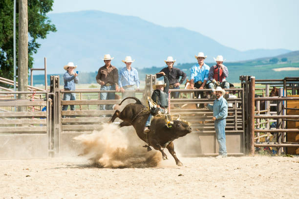 Cowboy Riding A Big Thundering Bull In A Rodeo Arena stock photo