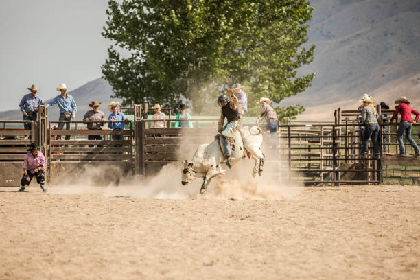 Cowboy Reite einen Stier – Foto