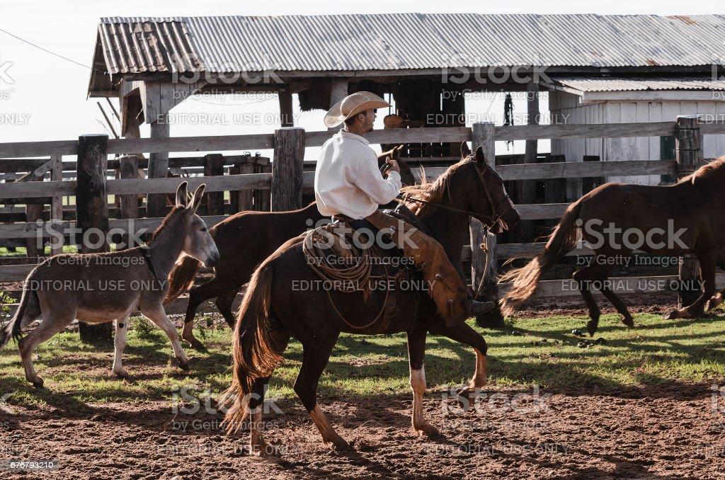 Vaqueiro a cavalo no curral de uma fazenda - foto de acervo