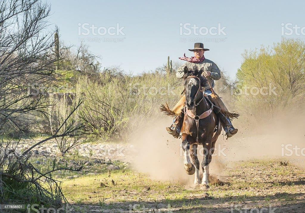 Cowboy riding horse straight royalty-free stock photo