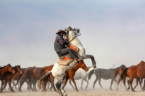 cowboy riding horses. cowboy on rearing horse. dog and wild horses