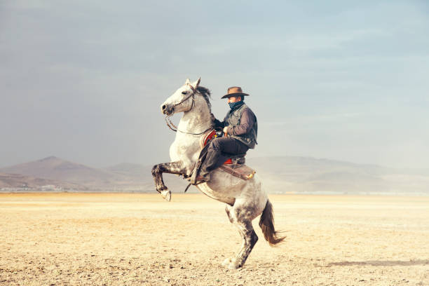 Cowboy riding horses. prancing horse stock photo