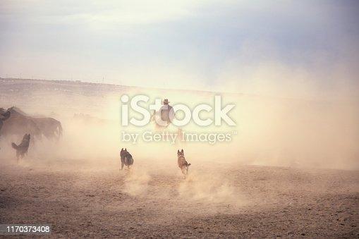 Cowboy on rearing horse, dogs and wild horses. Horses - Yilki Atlari live in Hurmetci Village, between Cappadocia and Kayseri, in Central Anatolian region of Turkey.