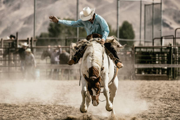 A cowboy riding on a bucking horse during the saddle bronc competition. stock photo