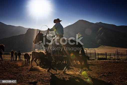 Cowboy preparing to rope a steer in a corral on a Utah Ranch. Lens flare and silhouette from the rising sun.