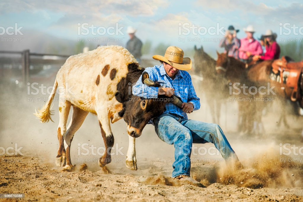 Cowboy Showing Grit And Strength During A Steer Wrestling Competition As He Drills Down His Heels Into the Dirt In Preparation Of Bringing The Steer To The Ground stock photo