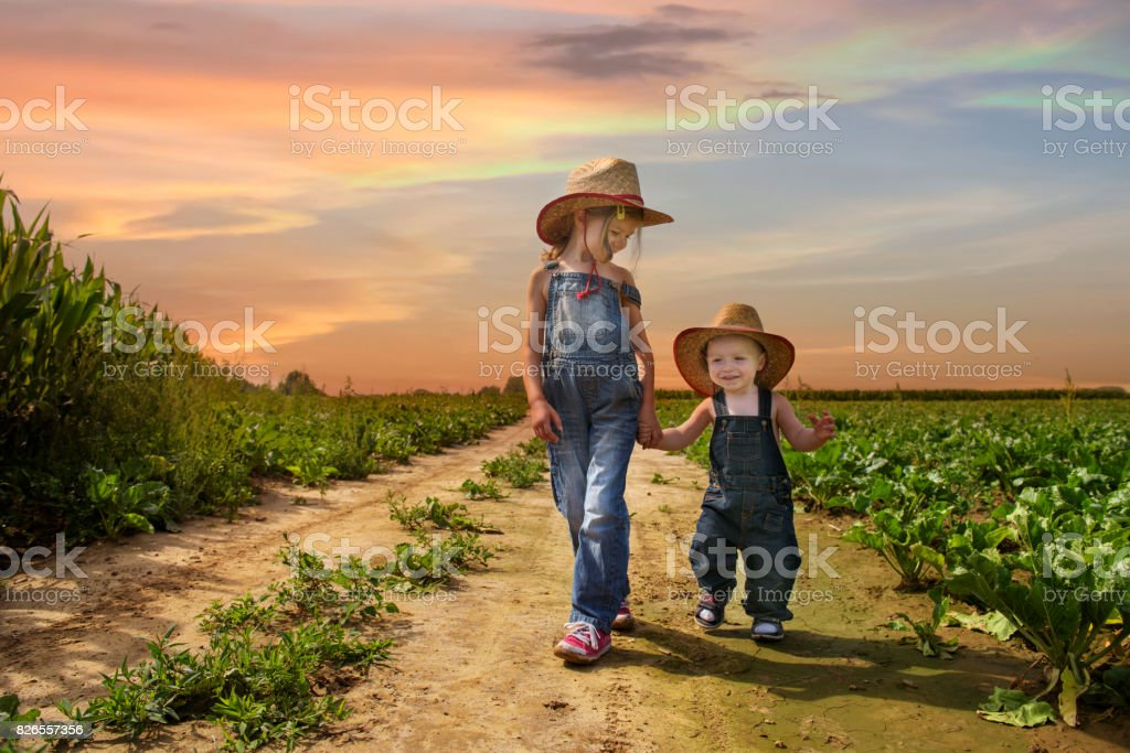 cowboy siblings walking in the fields at sunset stock photo