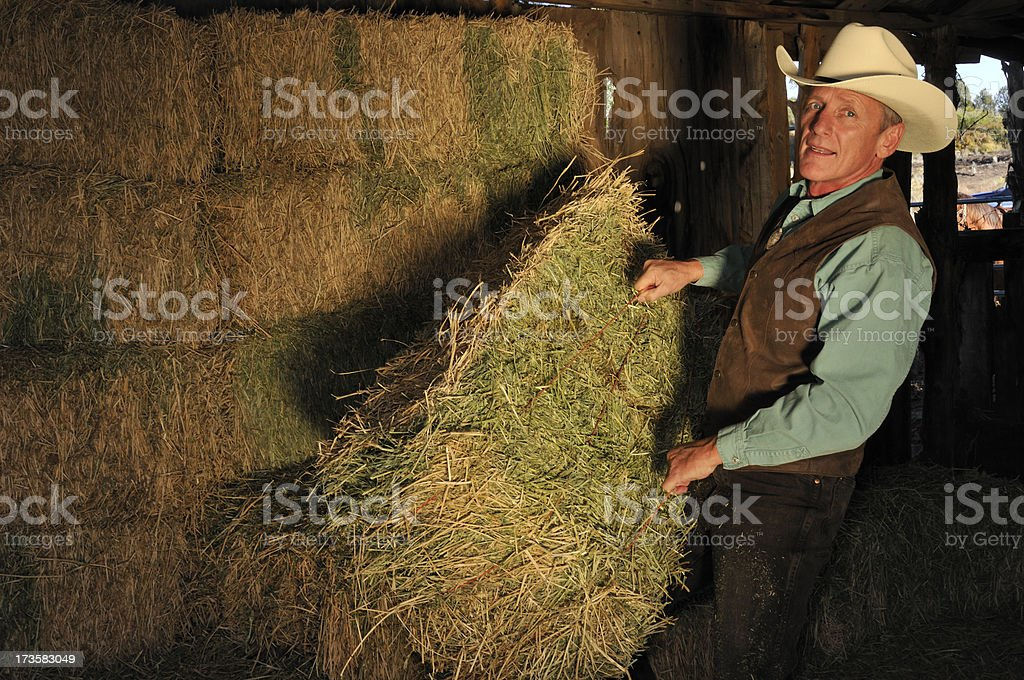 Cowboy Stacking Hay In The Barn stock photo