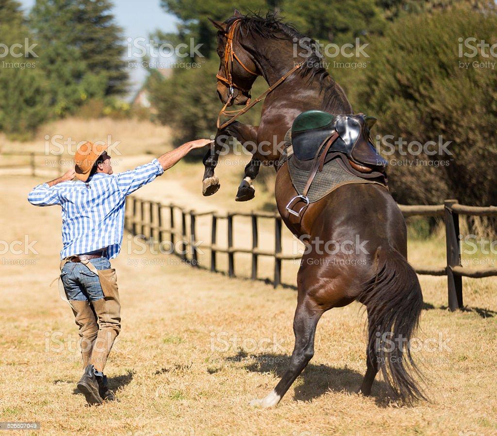 cowboy trying to control his horse stock photo