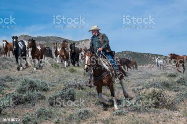 Cowboy wrangler riding paint horse leading herd of galloping horses picture id962915770?b=1&k=6&m=962915770&s=612x612&h=cfvf5ahl1hr0s jb5oq8tn4jhz3xmitbwfcqd84f9z4=