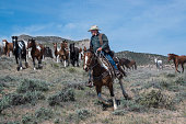 Cowboy wrangler riding paint horse leading herd of horses at a gallop in Craig, CO, USA May 5,2018