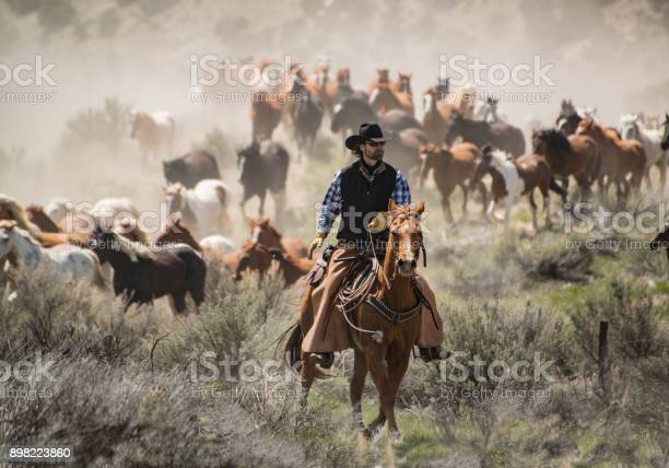 Cowboy wrangler with black hat and sorrel horse herding horse herd at picture id898223860?b=1&k=6&m=898223860&s=612x612&h=hnvkuz2v 8j5u7 mxwavkpuqryt qapiaejfo1po7ms=