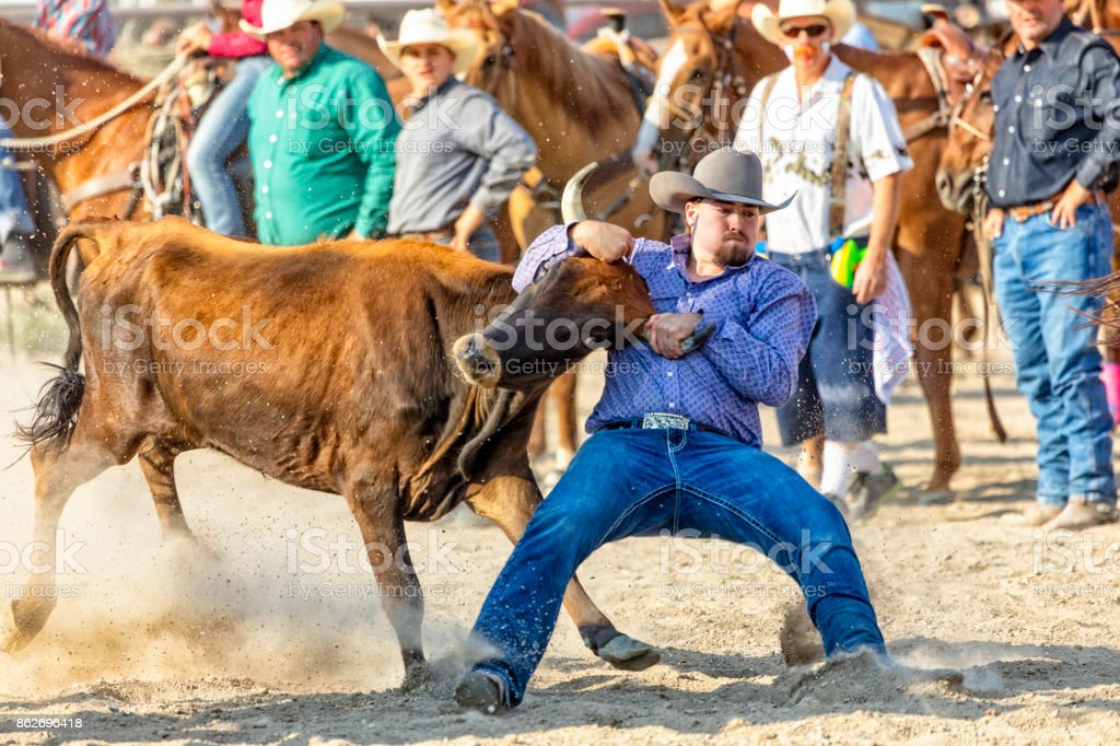 Cowboy wrestles a steer in a steer wrestling competition at a rodeo as others watch stock photo