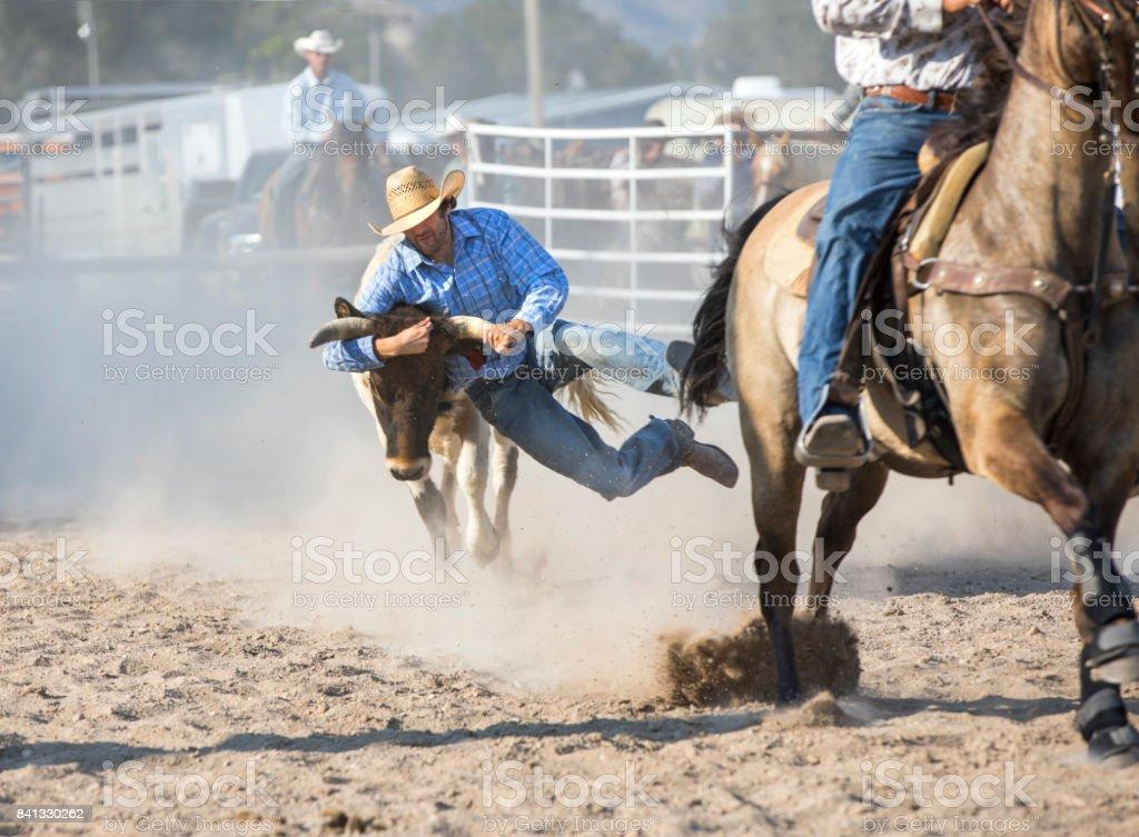 Steer Wrestling Cowboy à un rodéo - Photo