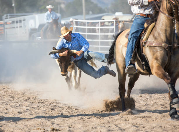 Cowboy Wrestling Steer at a Rodeo stock photo