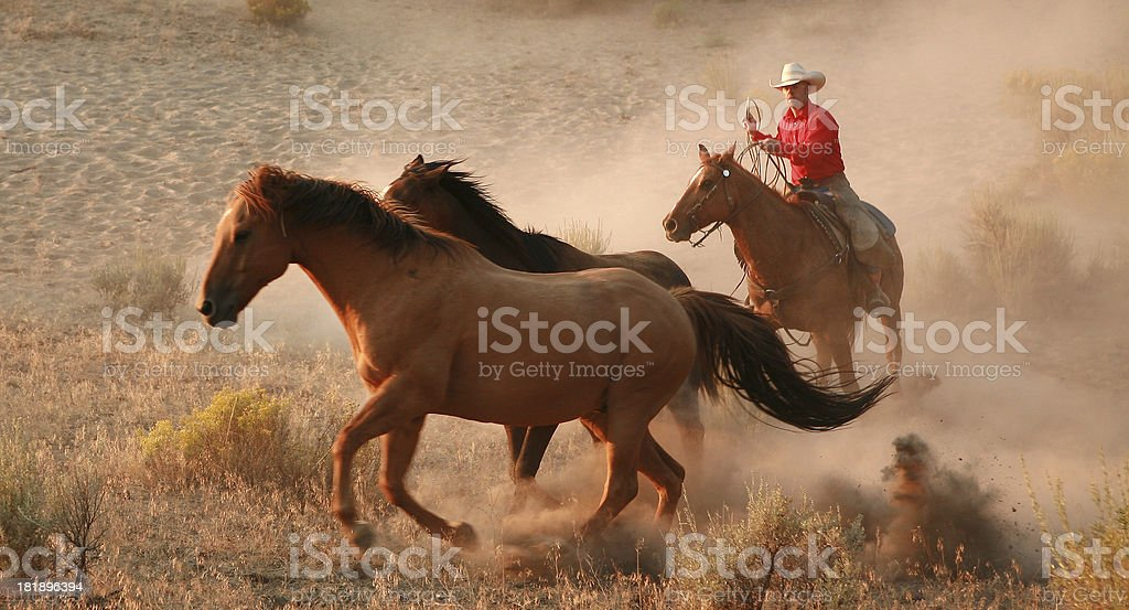 cowboys and wranglers 16 stock photo