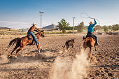 Rodeo Action,. Cowboys starting into the rodeo arena, riding, speeding on her horse chasing bull action. Bull Chasing Competition Training.- Lassoing training at rural Rodeo Arena. Real People Cowboy Series. Utah, USA.