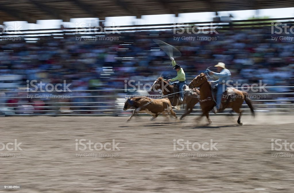 Cowboys calf roping at a rodeo in Montana royalty-free stock photo