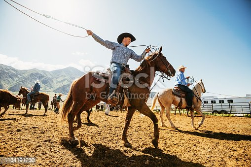 Cowboys lifestyle on the ranch in Utah, United States. Cowboys lassoing the calf