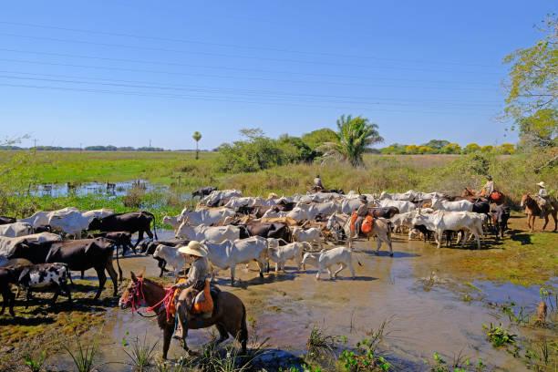 Cowboys on the Pantanal parkway stock photo
