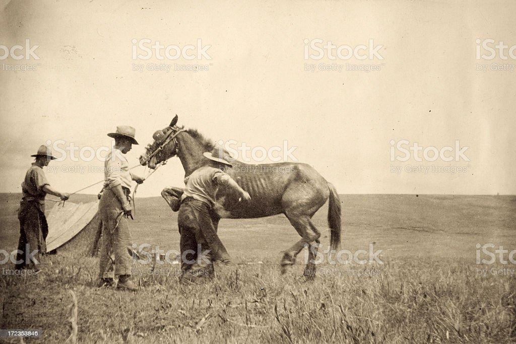 Cowboys foto de stock libre de derechos