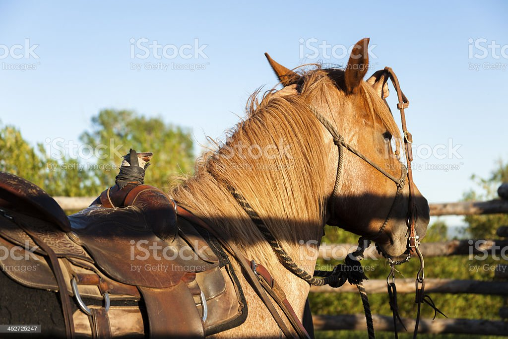 Cowboys:  Ready to ride horse on ranch.  Corral, saddle, bridle. royalty-free stock photo